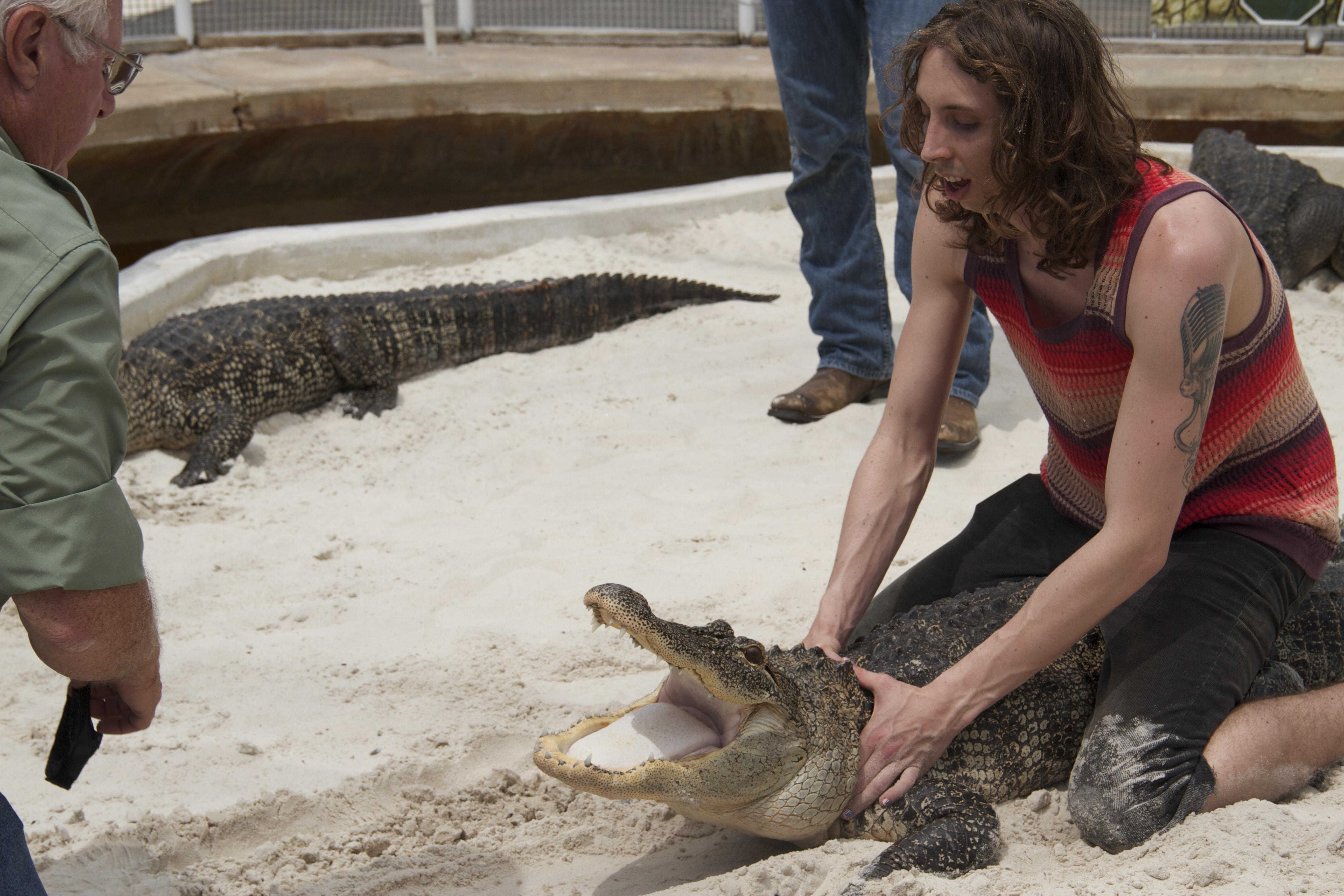 Alligator & Lampaert
